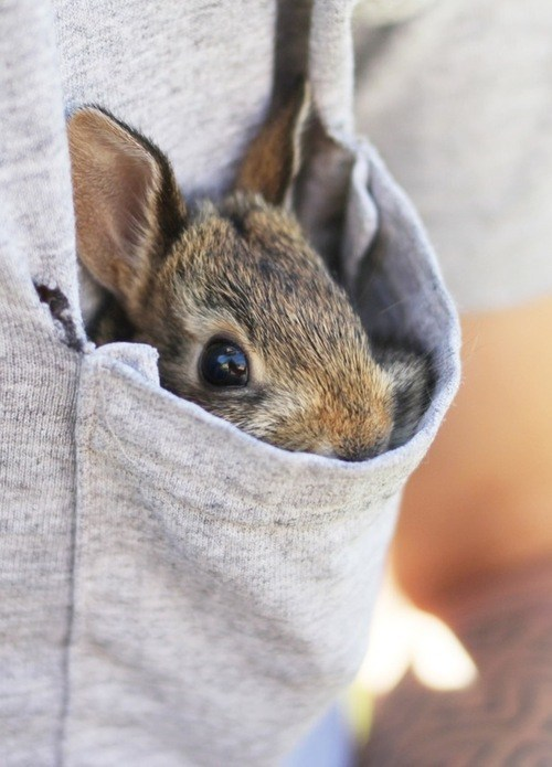 Bunday,baby,pocket,rabbit,bunny