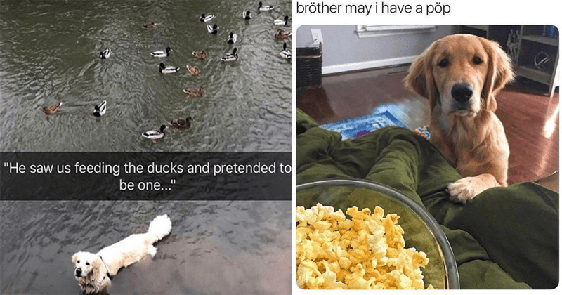 Funny dog memes, dog memes, cute dog memes, cute memes, wholesome memes.