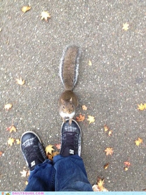 sharing,squirrels,food,squee