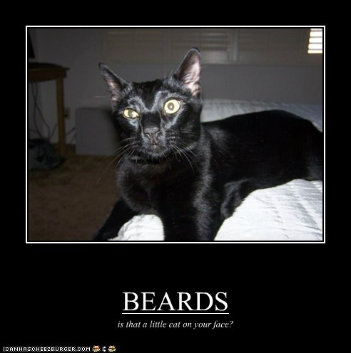 BEARDS is that a little cat on your face?
