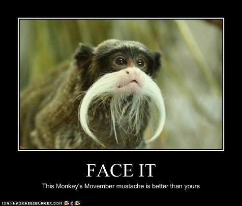 mustache,monkeys,better than yours,movember,face it