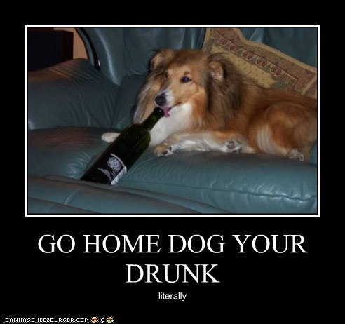GO HOME DOG YOUR DRUNK literally