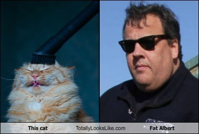 This cat Totally Looks Like Fat Albert