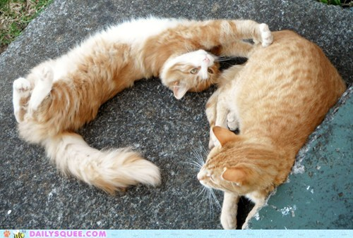 reader squee pets siblings Cats stretching squee - 6799449088