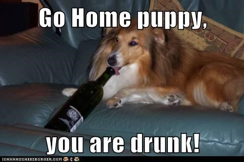 Go Home puppy,  you are drunk!