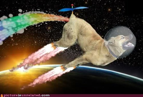 Nyan Cat,dogs,rainbow,space