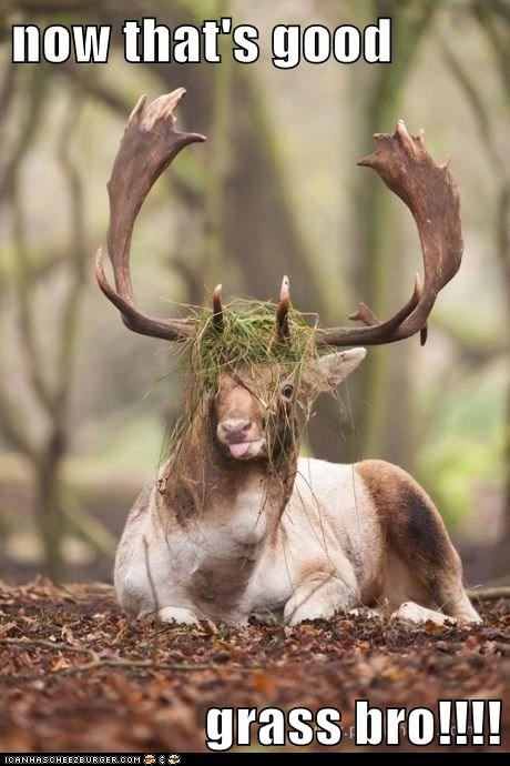 bro,grass,deer,sticking tongue out,derp