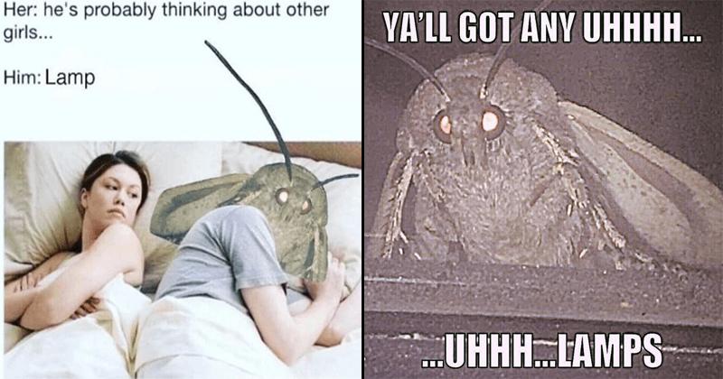 Funny moth lamp memes.