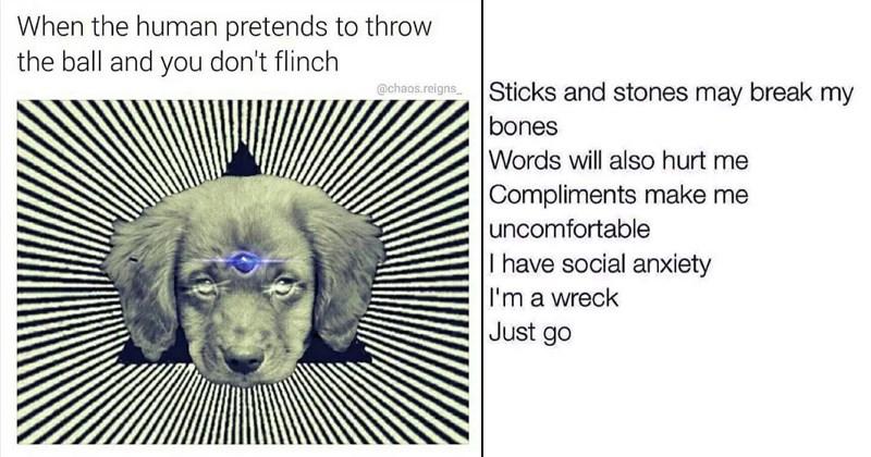 random memes funny memes spongebob memes procrastination boredom loops brother gordon ramsay loops funny tweets funny twitter dog memes doggo Cats cat memes - 6801669