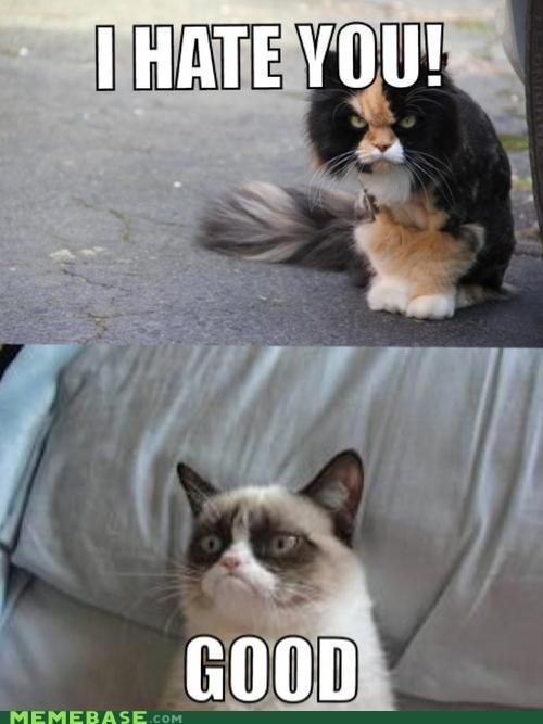 lolcats hate Grumpy Cat Cats - 6803384576