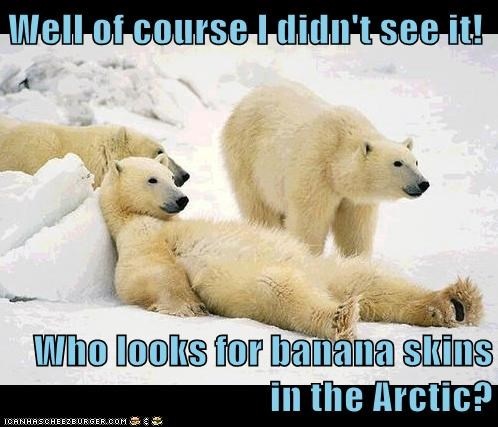 arctic,slipped,polar bears,banana peel,fell
