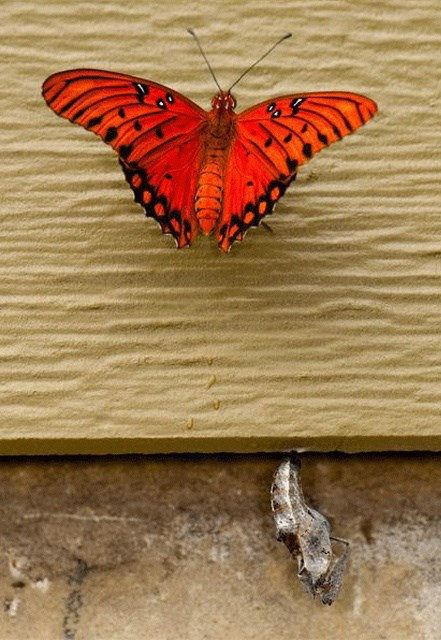 nature pictures butterfly birth - 6803461