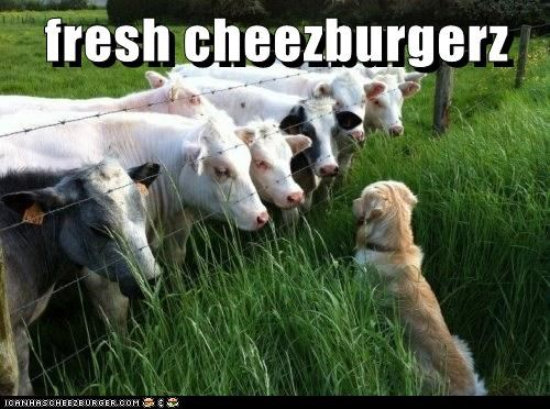 fresh cheezburgerz