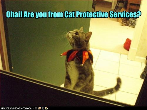 Ohai! Are you from Cat Protective Services?