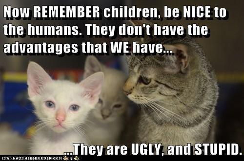 captions attitude humans advice ugly parent Cats stupid children - 6803942656