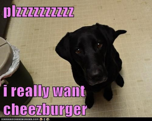 Cheezburger Image 6804206080