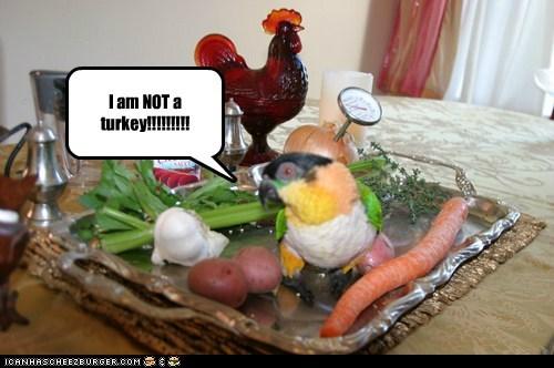 I am NOT a turkey!!!!!!!!!