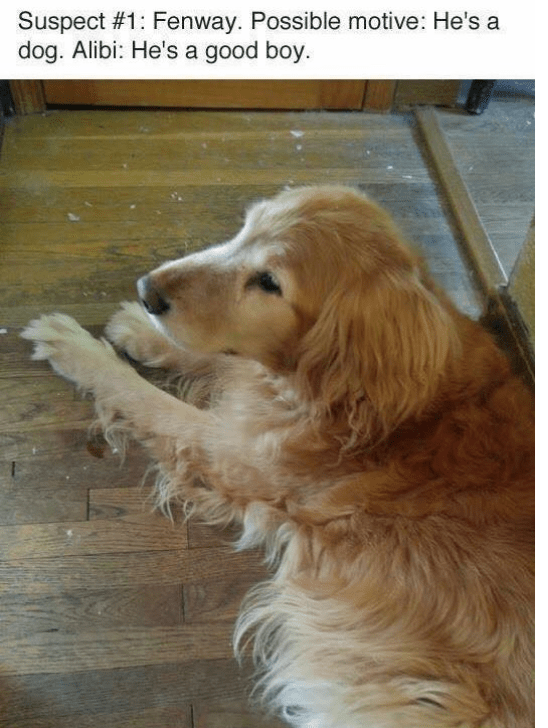 dogs crime feathers suspects investigation - 6804997