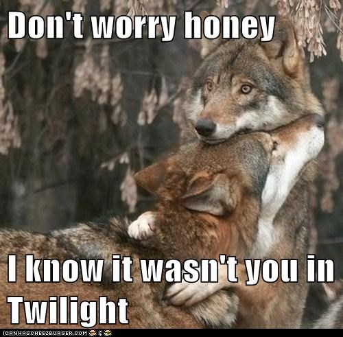 Sad wolves hugging comforting twilight