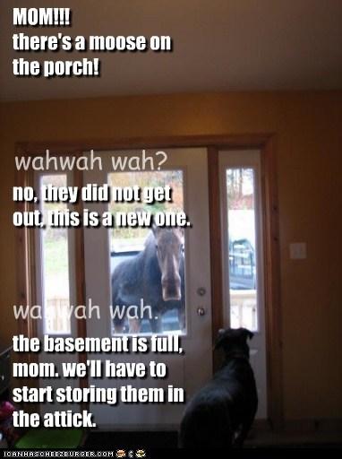 door basement porch house creepy moose - 6805941760