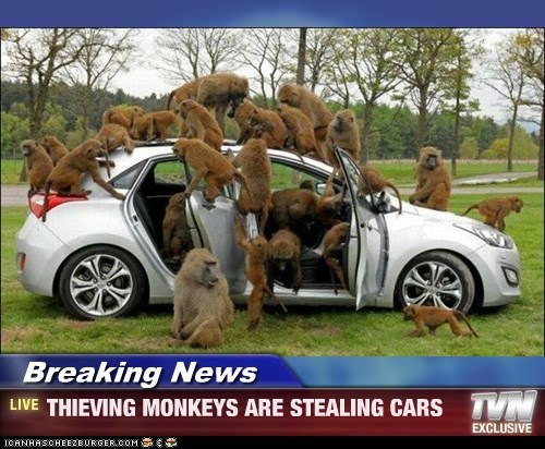 Breaking News - THIEVING MONKEYS ARE STEALING CARS