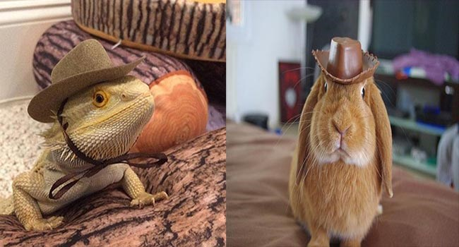 cute pics of animals wearing small cowboy hats