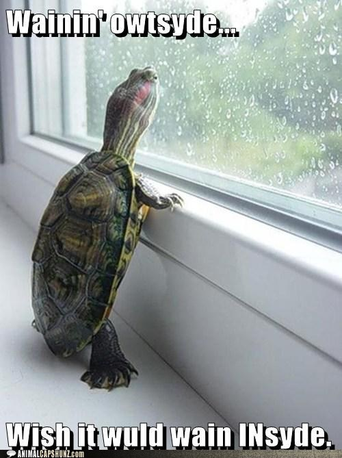 inside,raining,turtles,outside,wish