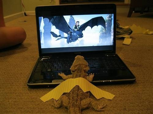 lizards,cute,How to train your dragon