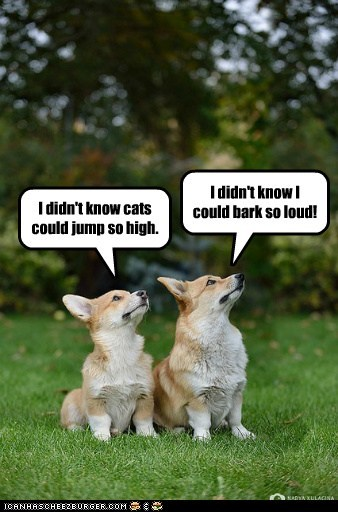 dogs scaring corgi Cats jumping - 6807354624