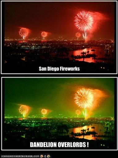 San Diego Fireworks DANDELION OVERLORDS !