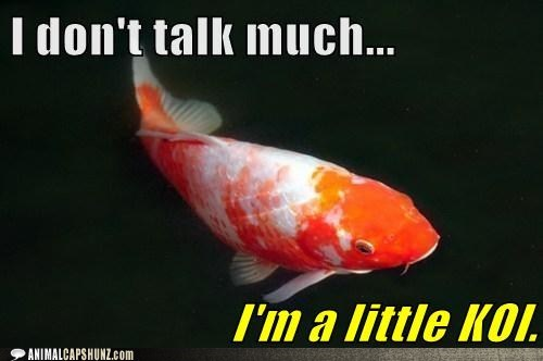 coy pun koi quiet talking fish - 6807421184
