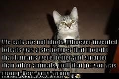 We cats are not idiots. Whoever invented lolcats was a steriotyper that thought that humans were better and smarter than other animals, well that person was wrong. Very, very, wrong.