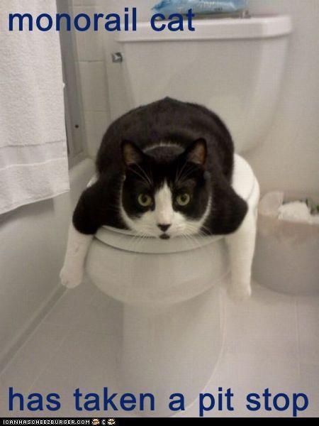 monorail cat   has taken a pit stop