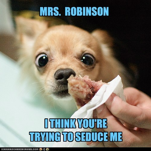 dogs,treats,mrs robinson,chihuahua,seduction,meat