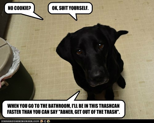 dogs,labrador,treats,trash,bad dog,cookies