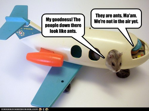 people hamsters ants first time they are airplane - 6808343040