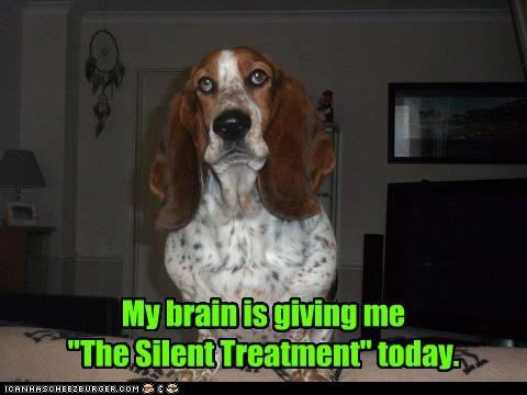 basset hound silent treatment brain derp - 6808356352