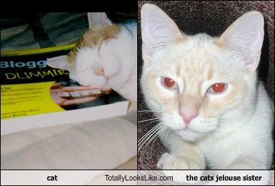 cat Totally Looks Like the cats jelouse sister