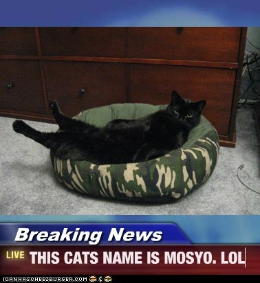 Breaking News - THIS CATS NAME IS MOSYO. LOL
