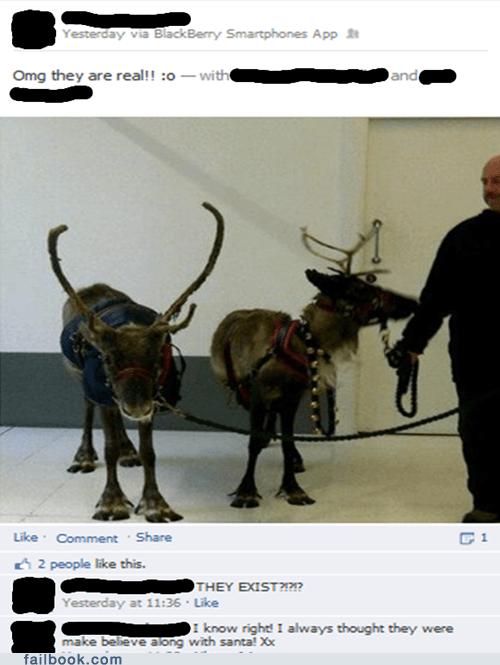christmas reindeer deer