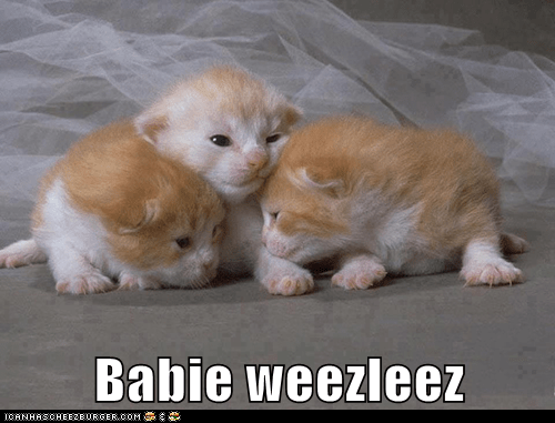 Babie weezleez