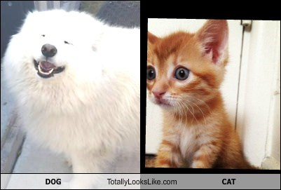 DOG Totally Looks Like CAT