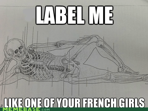 anatomy like one of your french girls science