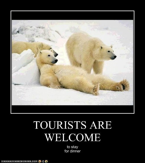 invitation eating people polar bears tourists welcome dinner - 6811667968