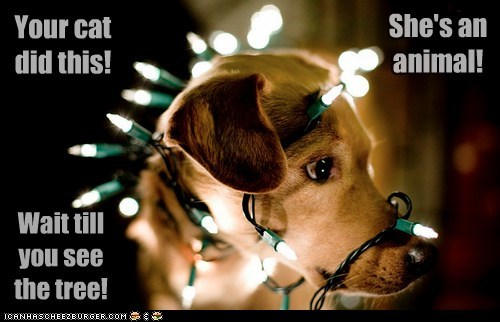 dogs,decorations,mean cat,christmas lights,what breed,holidays