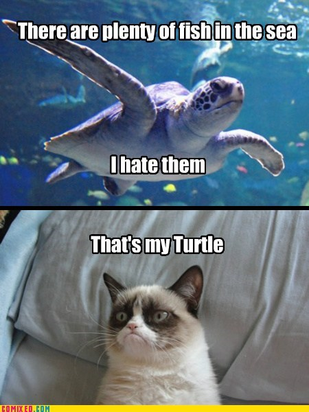 plenty of fish,turtle,Grumpy Cat