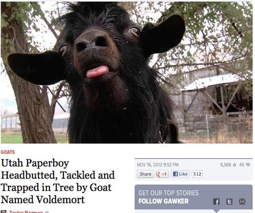 news goat Harry Potter voldemort attack