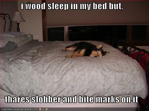 bed german shepherd - 681262848