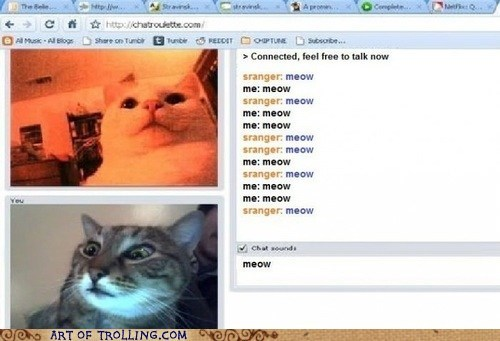 chatroulette,meow,Cats
