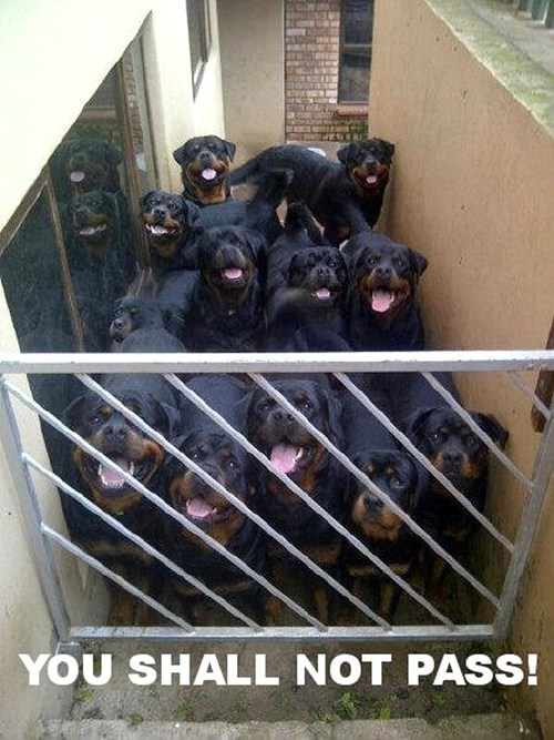 dogs guard dog rottweiler gate you shall not pass - 6813347840
